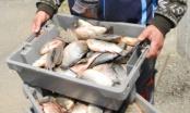 НАП удари търговците на риба в Бургас!